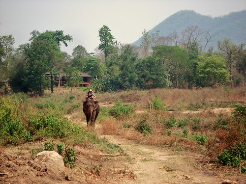 Riding Elephant in Pai