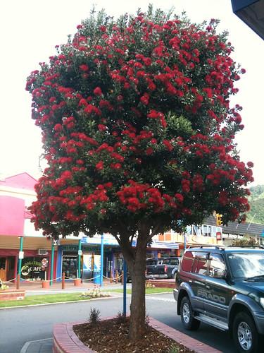 ニュージーランドのクリスマスを象徴するポフツカワの木