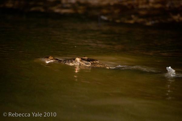 RYALE_Kinabatangan_River_73