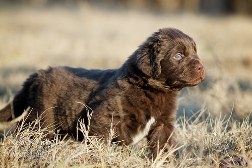 2010-12-23-Puppies61