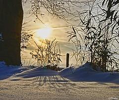 X-mas morning, 25-12-2010  (Explored) (Pjotre7 (www.maartenvandevoort.nl)) Tags: christmas morning winter light shadow sky sun white abstract holland color colour art nature netherlands beautiful dutch contrast photoshop landscape photo mood foto shadows dof artistic sony nederland silhouettes explore story nik schaduw tilburg dsc ochtend christmasday kerstmis eerste 2010 kerstdag udenhout explored naturepoetry a550 pjotre7 25122010