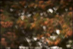 Nature is full of Love (Rajesh Vijayarajan Photography) Tags: abstract nature leaves bokeh bangalore 50mmf14 50mmlens bengaluru greencanopy nikond80 bokehhearts bokehspots sahakaranagar rajeshvijayarajan rajeshvijayarajanphotography rajeshvj natureisfulloflove