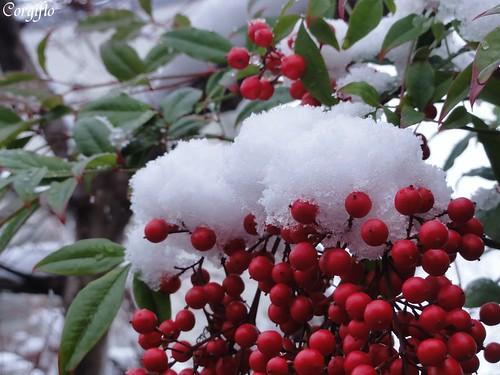 BLOG-101226-neige-04