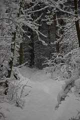 Horse trail (Marco Sombroek) Tags: winter snow holland netherlands dunes sneeuw nederland duinen noordholland heemskerk horsetrail northholland duingebied ruiterpad