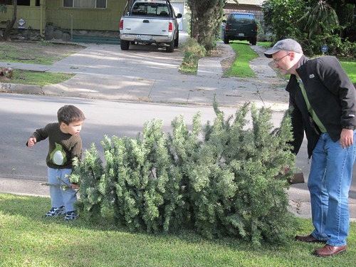 Finn and Bruce take out the tree