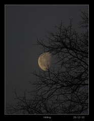 P1080401 Hiding, 26-12-10 (Enlightenshade - Jon Perry) Tags: morning moon tree dark veil branches silouette hide shroud shield chiswick protect obscure w4 conceal actongreen abigfave jonperry 20101226 261210 enlightenshade