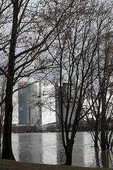 Rheinhochwasser Bonn 09.01.11 (JKB MEX) Tags: germany deutschland wasser bonn flood ufer rhine rhein meltingsnow hochwasser pegel flut riverrhine steigen wassermassen schmelzen schneeschmelze
