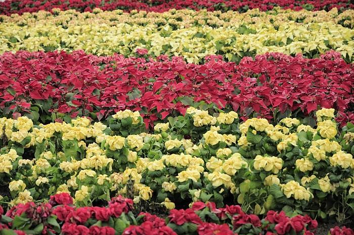 taipei-flora-expo-yuanshan