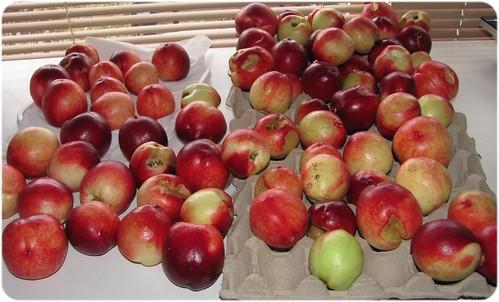 110109_nectarine_crop