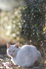 Why don't you take sunbath with me? (Takashi(aes256)) Tags: park animal cat    canonef85mmf12liiusm canoneos7d