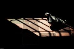 Inquilinato V (alejocock) Tags: poverty casa colombia photographer colombian vieja ruina medellin detalles pension pobreza urbanfragments lovaina acock lavadores alejocock httpsurealidadblogspotcom alejandrocock inquilinato decarrosacockalejocockcolombiamedellinalejandrocockcasacolombianhttpsurealidadblogspotcomphotographerpobrezaruinavieja