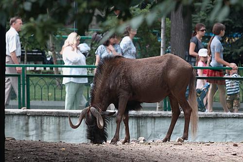 Zoo_4982