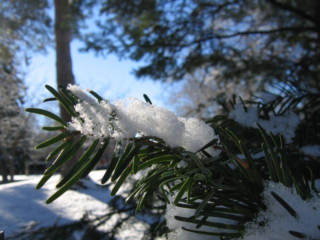 Light through the snow
