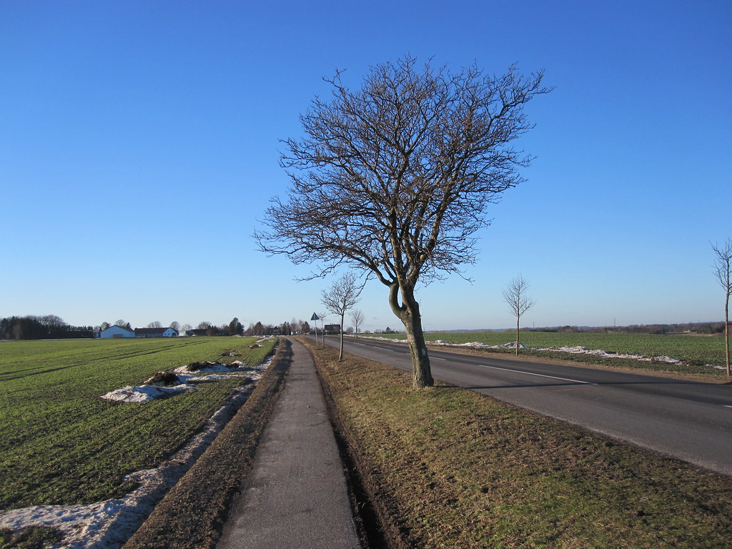 Tree between Gadstrup and Ramsømagle