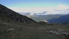 gregge alle Grotte di Paroeul (Alberto Cameroni) Tags: 33 24 24mm sentiero 169 lombardia rifugio crepuscolo pecore brioschi valsassina gregge malcontento pialeral dlux4 grottediparoeul