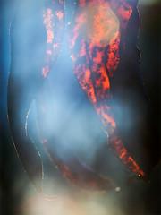 _IGP1303_web (Erik Koffmar) Tags: autumn colcors leaf orange hst lv helios 442 koffmar norby uppsala sweden sverige f20 pentax k10d