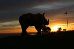 Tranquillity on the downs | The Great Big Rhino Project | Babbacombe Downs (Jacob Tyne) Tags: tranquillity the great big rhino project trail babbacombe downs sunrise devon torquay paignton zoo english riviera celebration conservation collaboration union jack
