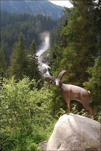 Cabra en las cataratas Krimml (Austria, 21-7-2016)