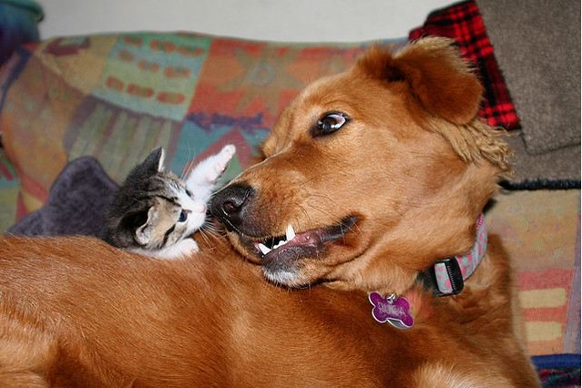 cute rescued kitten and foster brown dog