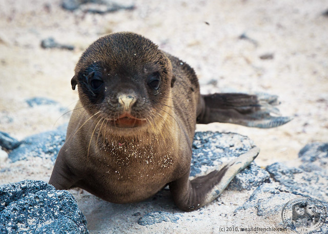 Aww, Another Baby Fur Seal