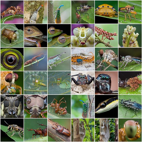 2010 faves mosaic macro images macro photography favorite shots