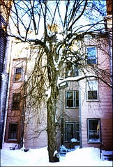 Before the city came to remove it (Emily Taliaferro Prince) Tags: city trees winter cambridge snow tree buildings massachusetts inmansquare