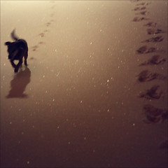 | follow me on diamonds | (sommerpfuetze) Tags: shadow 2 dog snow sepia night diamonds traces follow rudi ways sausagedog freshsnowfall adamantine thelittledoglaughed