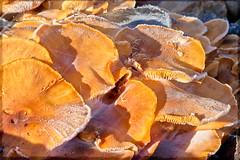 Fungus Amongus! (CharsShots) Tags: mushrooms cobwebs clichsaturday
