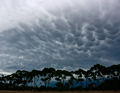 Storm Warning, Adelaide _8020_2a (Rikx) Tags: trees sky storm rain clouds dark explore adelaide southaustralia stormclouds mammatus matchpointwinner