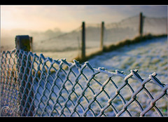Frosty Fence For Friday......... (Digital Diary........) Tags: morning mist cold sunrise fence focus frost hoarfrost freezing chrisconway fencefriday
