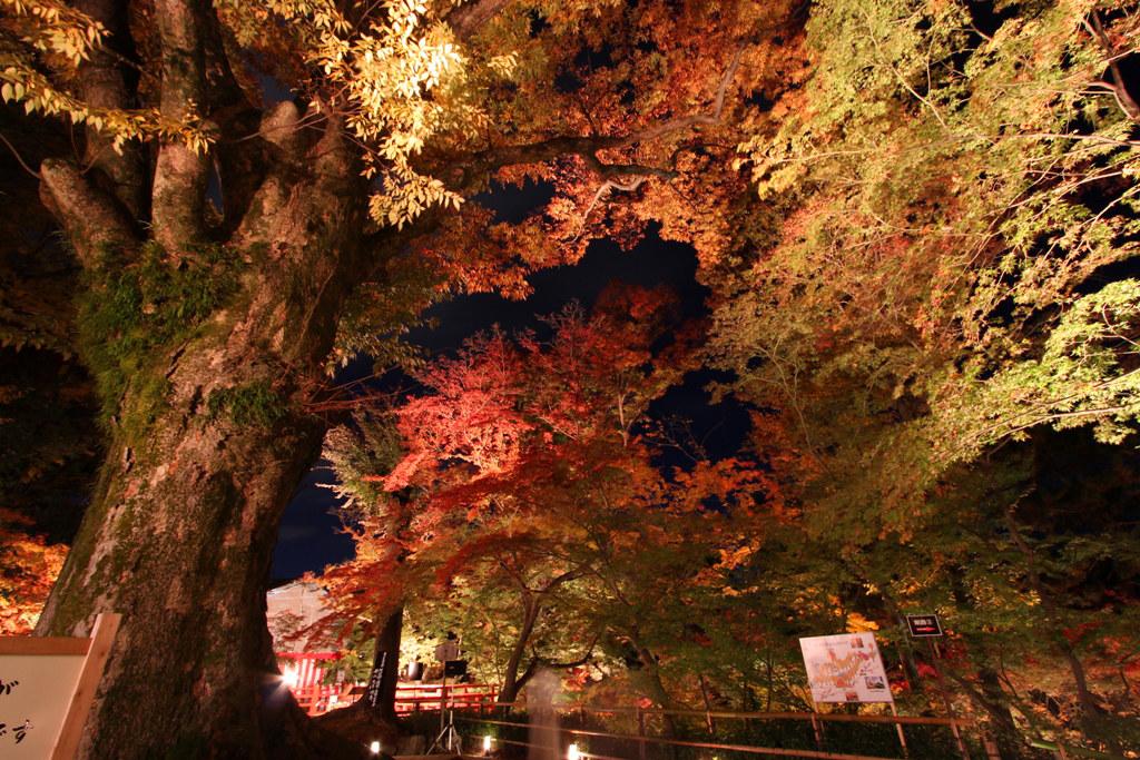Kitanotenmangu Red Leaf Lightup 2010 (1)
