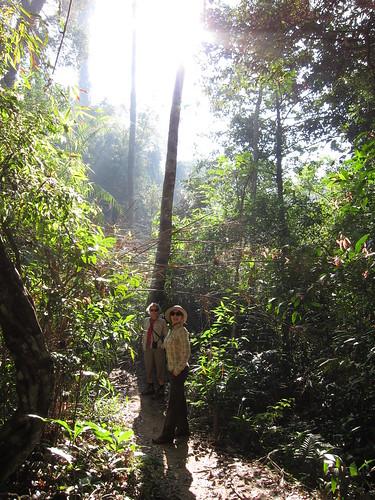 dżungla w Khao Yai