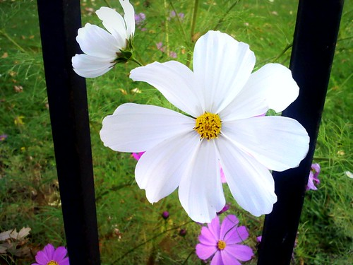 69/365 Flowers