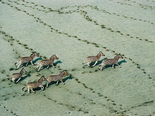 Зебры, Ботсвана