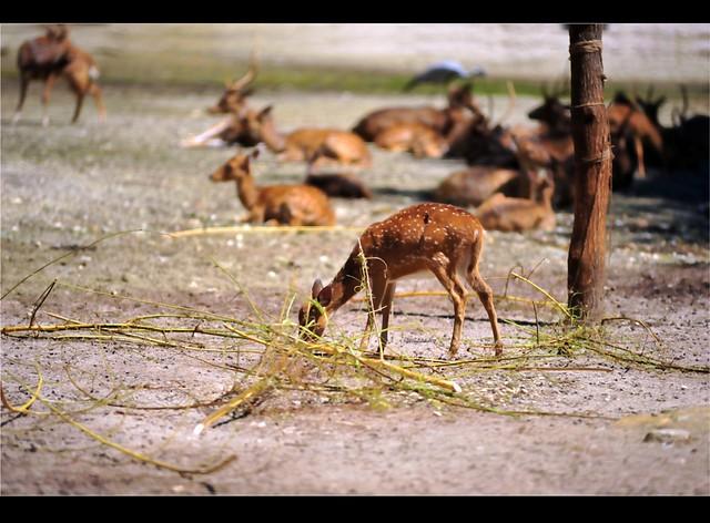 Zoo Taiping 11