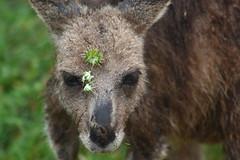 The Grampians National Park 15 (gsamie) Tags: canon australia grampians legend oceania whv 450d gsamie guillaumesamie