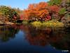 Koishikawa Korakuen Gardens, Japan