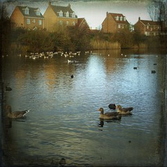 (And Soon the Darkness) Tags: uk trees houses lake texture water birds reflections square geese ducks squareformat peterborough eyegreen magicunicornverybest eyegreennaturereserve