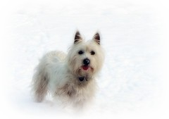 Abbi In the snow (♥ Katie ann. Off more than on.) Tags: showroom petportraits fantasticnature mywinners theunforgettablepictures adorablecritters photossanfrontieres damniwishidtakenthat alittlebeauty handselectedphotographs bestofdamniwishidtakenthat coloursoftheheart showroomsbest