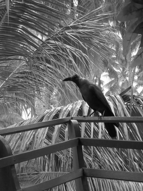 Arty crow