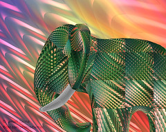 Indian elephant (Hemali Tanna) Tags: elephant art colors beautiful bright maya programming renderman rsl displacement richcolors hemalitanna