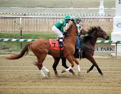 2011-01-01 (11) r1 David Cora on #7 Senator (JLeeFleenor) Tags: horses ma caballo cheval photography photo photos uma jockeys jockey gigi chestnut horseracing laurel jinete cavallo cavalo each kuda alogo lrc hest thoroughbreds soos hevonen koin laurelpark  jokey hst  jquei  ko faras  thoroughbredracing  konj    laurelracetrack dokej rennreiter fantina  pfeerd  laurelracecourse dokej laurelparkracecourse     okej kilparatsastaja  jocheu