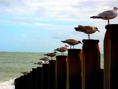 'one cannot be angry when one looks at a penguin' (forget_me_not) Tags: sea seagulls seaside order eastbourne groynes