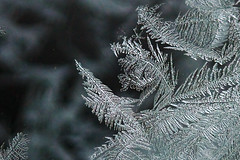 20110107_F0002_1600_20101230 (wfxue) Tags: winter snow cold fern macro ice window frost crystal hexagon leafs windowfrost icecrystal fernfrost