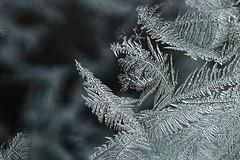 20110107_F0002_1600_20101230 (wfxue) Tags: winter snow cold fern macro ice window frost crystal hexagon leafs windowfrost icecrystal fernfrost