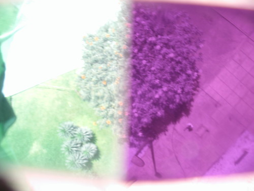 Visible/infrared of a tree from above, with bifocal filter