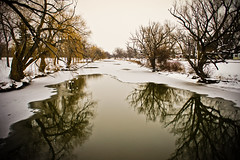 winter trees (@clp) Tags: life statepark park county trees winter plants white cold reflection ice pool creek photoshop buffalo melting quiet sony calm coloring serene melt melancholy barren isolated endless lightroom westernnewyork tonawanda lifeless sonynex3