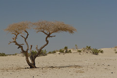 On our way to the vulcano Erta Ale (Rita Willaert) Tags: ethiopia vulcano danakil ethiopi ertaale danakildepression danakildepressie