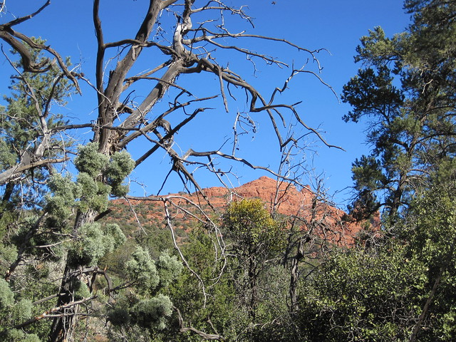On the Huckaby trail, Sedona