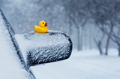 What a ducky day! (pixelmama) Tags: winter snow yellow duck lol january rubberducky snowday gettyimages lakebluffillinois pixelmama toyintheframethursday htitft whataduckyday thatsaquackup forsarahp